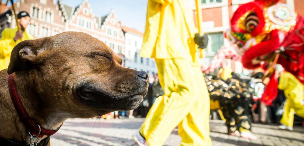 Chinezen vieren het nieuwe jaar van de hond in gaststad Gent.