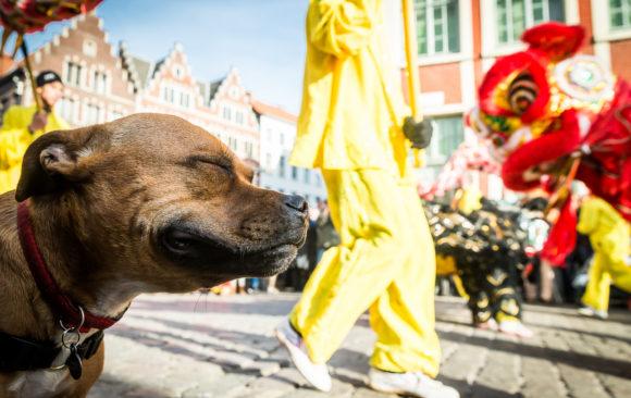 Chinezen vieren nieuw jaar (van de hond) in gaststad Gent